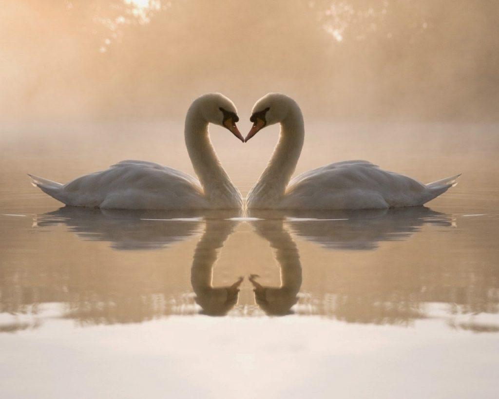 El amor necesita de dos cosas: Tiene que estar  enraizado en la libertad y tiene que conocer el arte de la confianza.